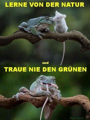 grüner Frosch.jpg